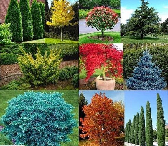 گیاهان محوطه ویلا شمال