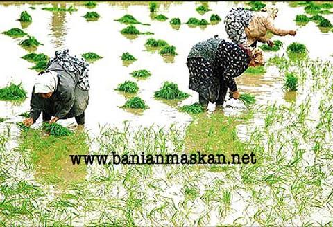 کاربری کشاورزی زمین