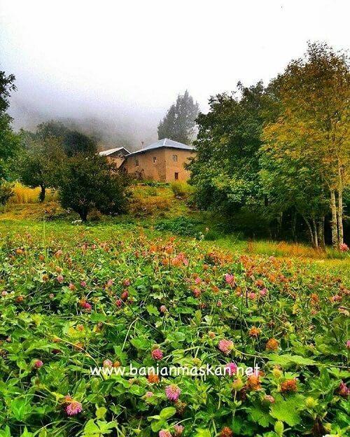پوشش گیاهی در ویلا جنگلی