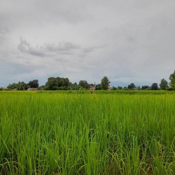 آیا میخواهید در زمینهای دارای پهنه کشاورزی کار کنید